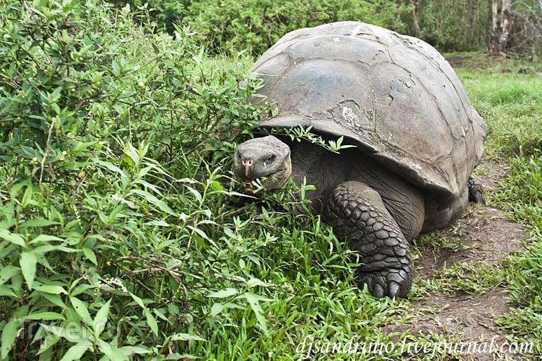 The Galápagos, Rancho Primicias / Эквадор