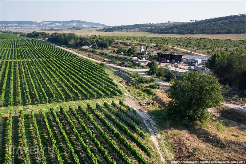 Виноградники Алексея Акчурина в Крыму, Украина / Фото с Украины