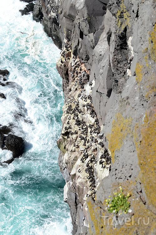 Исландия. Самая западная точка. Скала Latrabjarg / Фото из Исландии