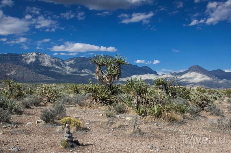 Каньон Красных Камней / Фото из США