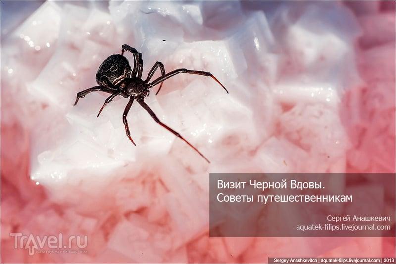Каракурты в Крыму. Советы путешественникам / Украина