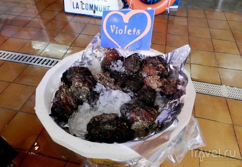 В Лёкат, знакомиться с устрицами / Франция