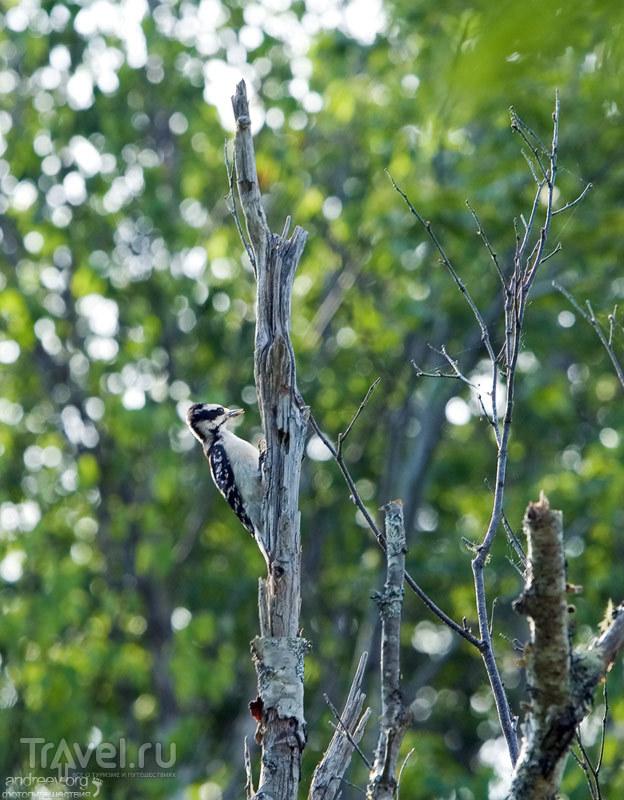 В заповеднике Petit Manan Wildlife refuge в штате Мэн, США / Фото из США