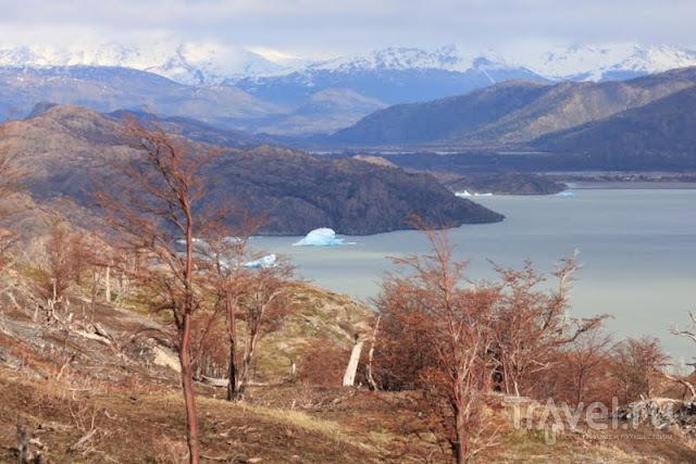 В национальном парке Торрес-Дель-Пайне, Чили / Фото из Чили