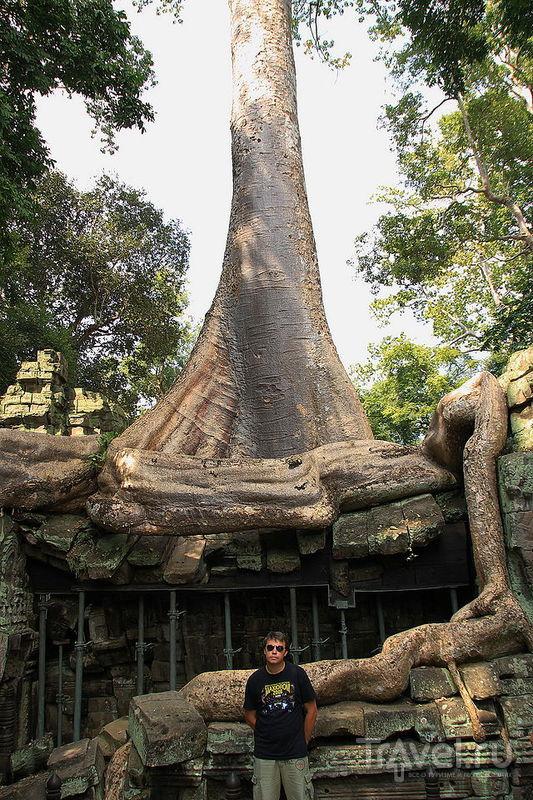 The Spitit of Indichina. Та-Пром, Камбоджа / Фото из Камбоджи