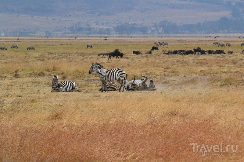 Самостоятельное сафари в Танзании. Кратер Нгоронгоро / Танзания