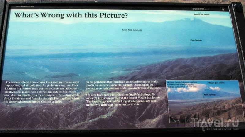 """Вокруг Штатов за 20 дней: парк """"Джошуа-Три"""" и Долина прыгучих кактусов / Фото из США"""