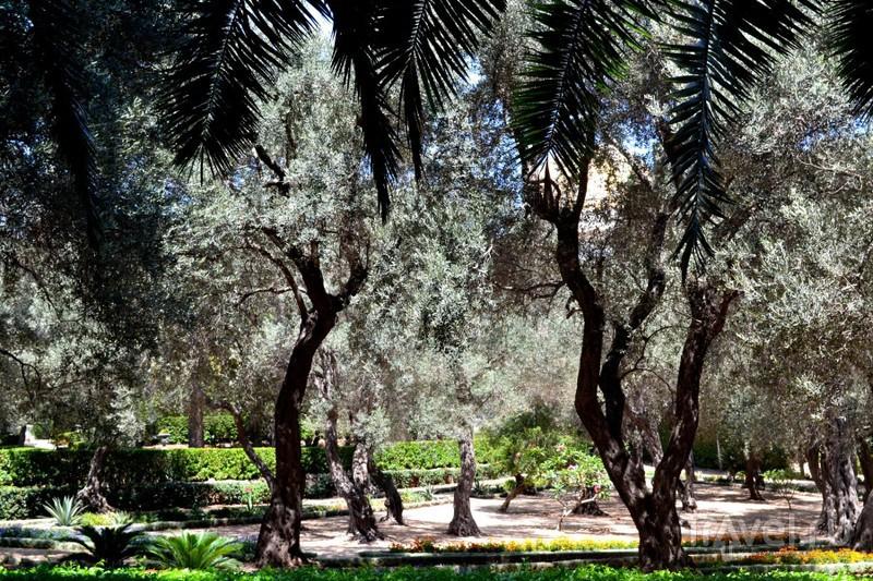 Восьмое чудо света - Бахайские сады / Израиль
