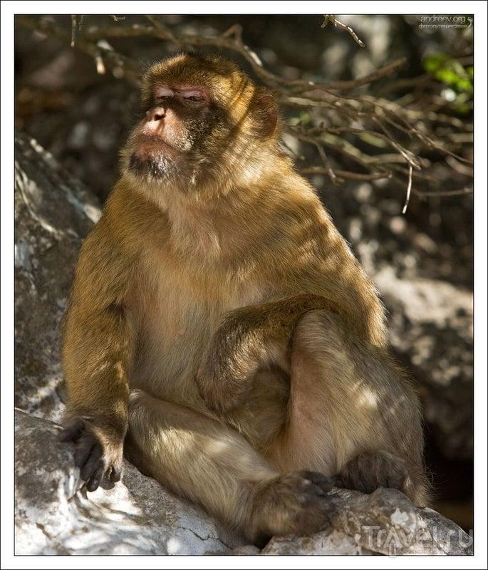 Гибралтар: скала обезьян / Фото из Гибралтара