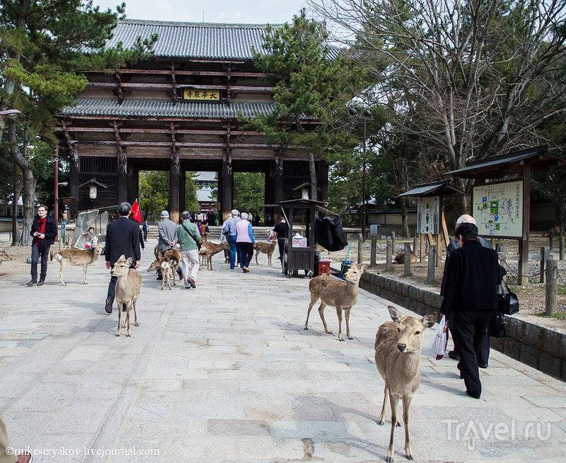 Храм Тодай-Дзи в Наре, Япония / Фото из Японии