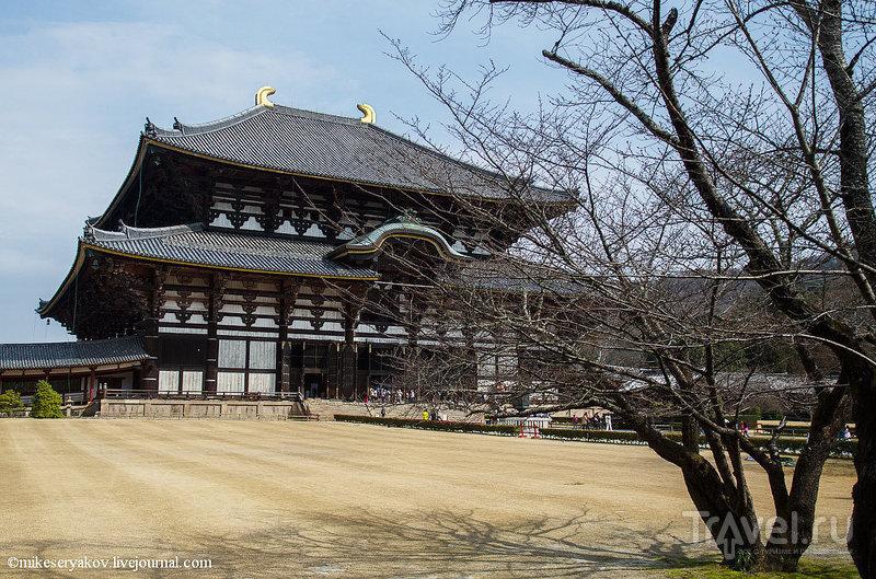 Храм Тодай-Дзи в Наре / Фото из Японии