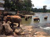 Купание слонов / Шри-Ланка