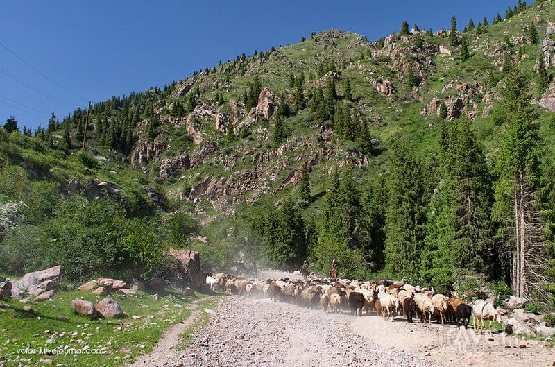 Григорьевское ущелье, Киргизия / Фото из Казахстана