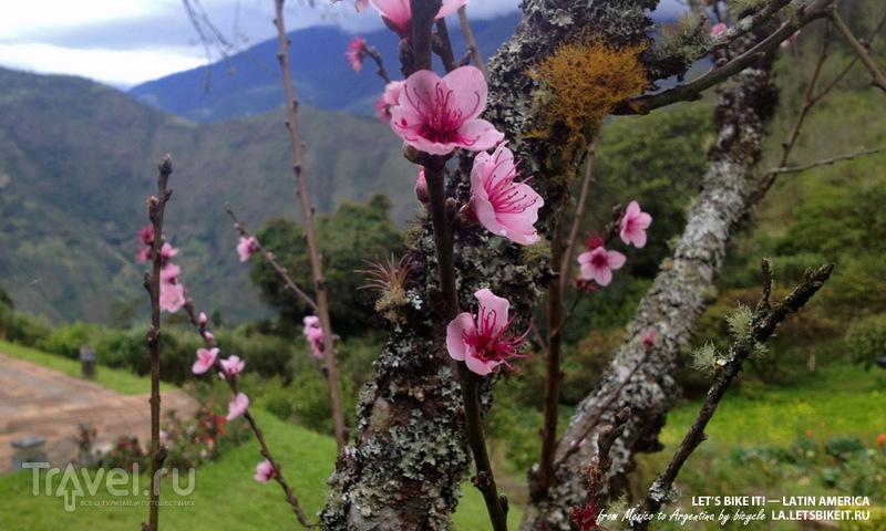 Аллея вулканов / Эквадор