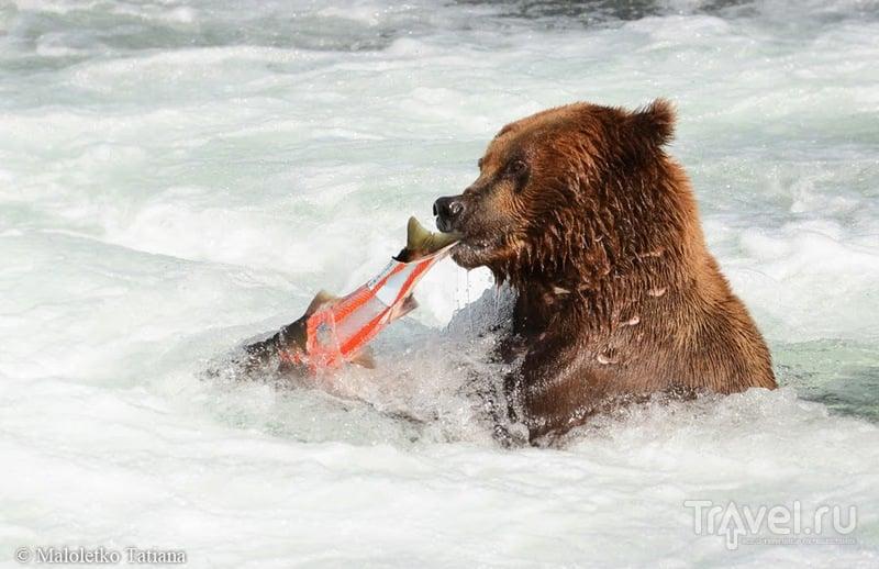 В национальном парке Катмаи на Аляске, США / Фото из США
