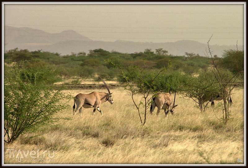 Awash National Park / Фото из Эфиопии
