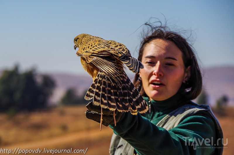Реабилитационный центр хищных птиц Dullstroom в Южной Африке / ЮАР