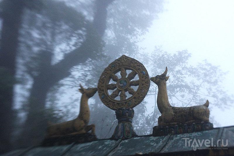 Дарджилинг встретил нас непроглядным туманом / Фото из Индии