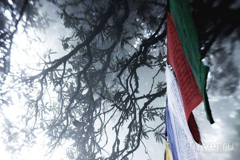 Дарджилинг. Жизнь внутри облака или Норвегия в квадрате / Фото из Индии