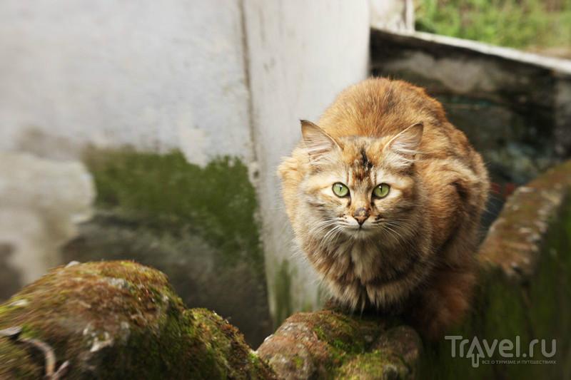 Котик Дарджилинга / Фото из Индии
