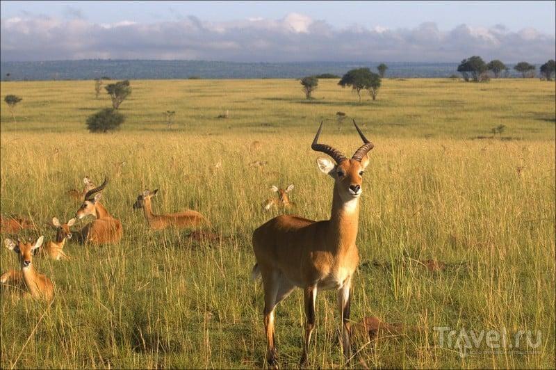 Немного про Уганду и нацпарк Мерчисон / Уганда