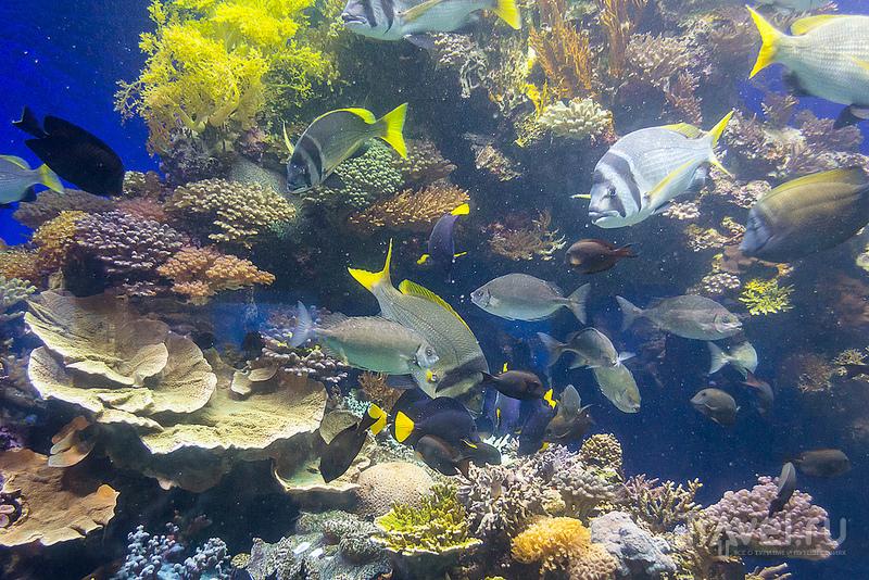 Эйлатский аквариум / Израиль
