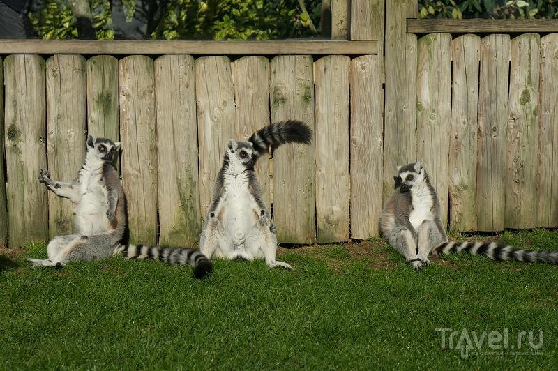 """Зоопарк """"Друзилла"""" / Фото из Великобритании"""