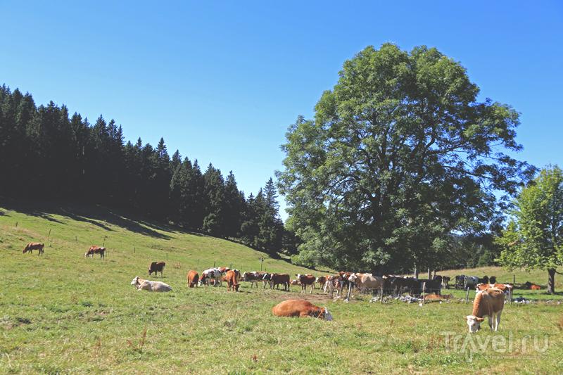 В Швейцарии / Фото из Швейцарии