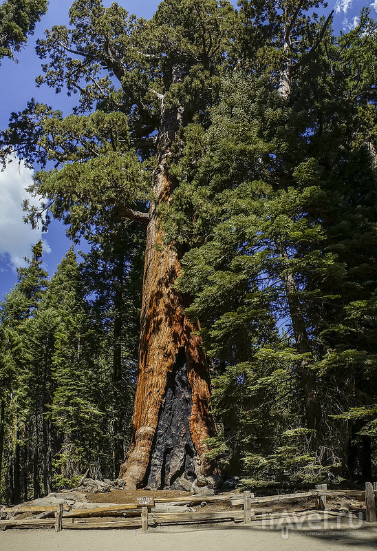 Национальные парки Йосемити и Секвойя / США