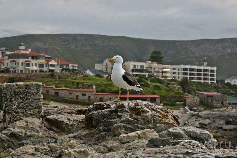 ЮАР. Херманус. Край земли / Фото из ЮАР