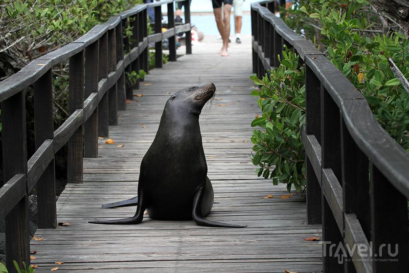 Галапагосские острова. Морские львы на суше / Эквадор