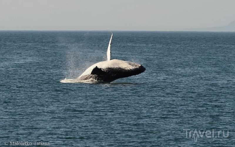 Аляска. Джуно, киты / Фото из США