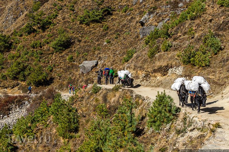 В Непале / Фото из Непала