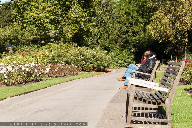 Лондон, Риджентс-Парк / Фото из Великобритании