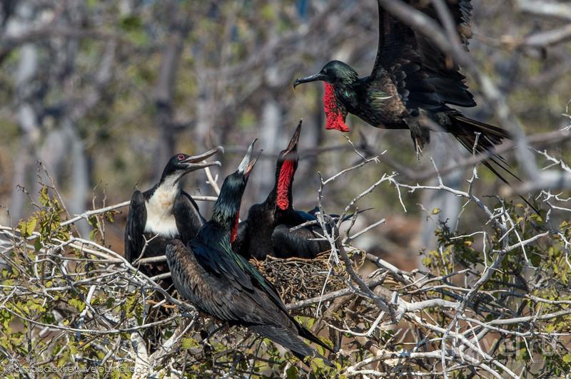 Птицы Галапагосских островов / Фото из Эквадора
