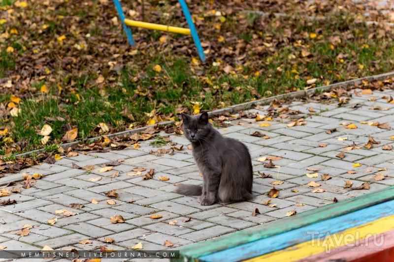 Городец / Фото из России