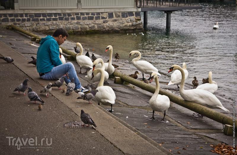 Люцерн: мир кораблей, людей и белых лебедей / Фото из Швейцарии