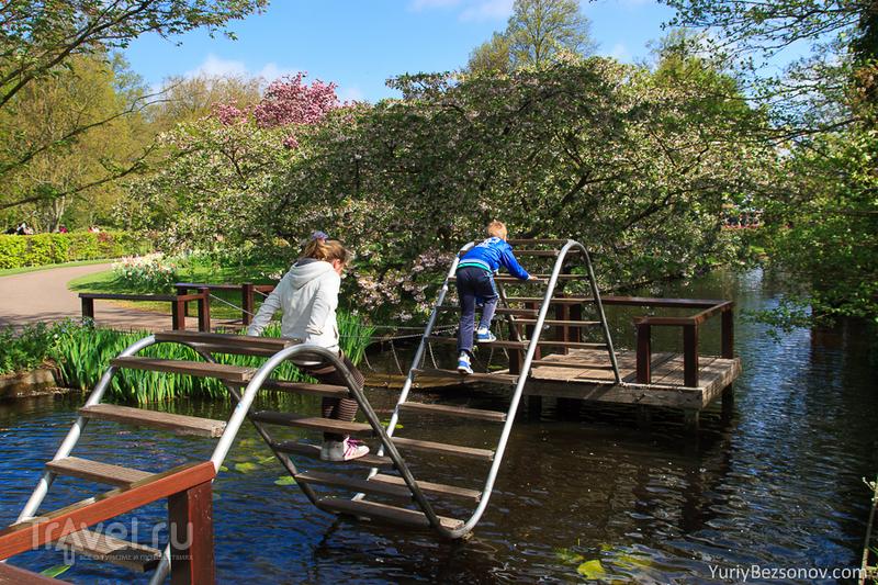 В парке Кейкенхоф, Нидерланды / Фото из Нидерландов