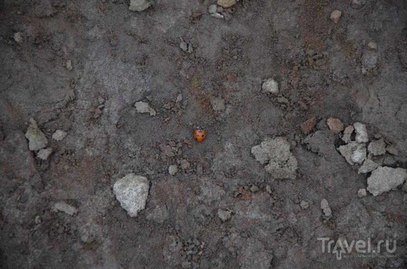Камчатка. Край для людей и медведей / Фото из России