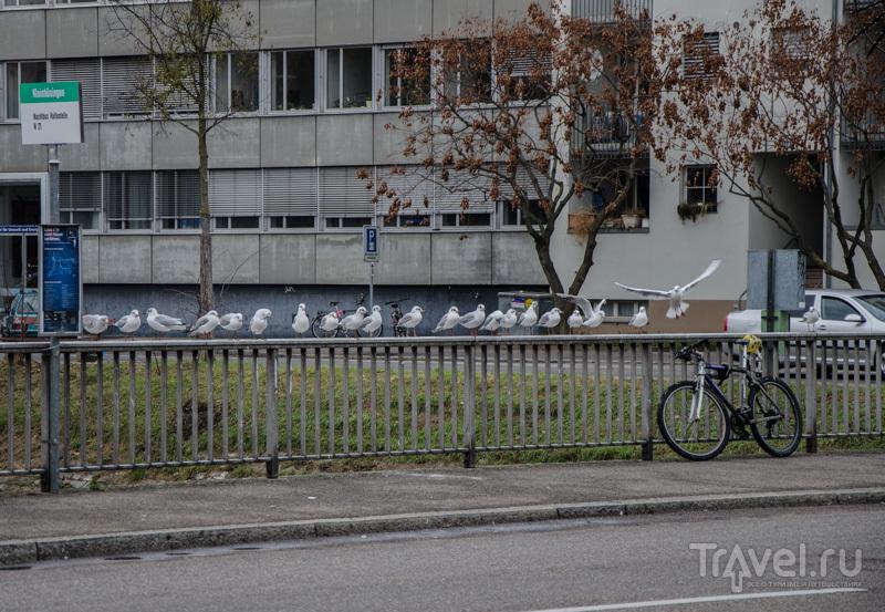 """В районе """"Угла трех стран"""" / Фото из Швейцарии"""