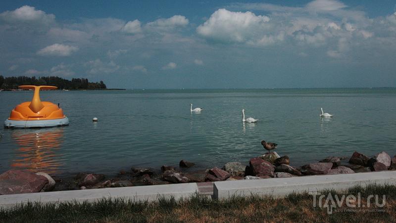 Озеро Балатон у города Балатонфюред, Венгрия / Фото из Венгрии