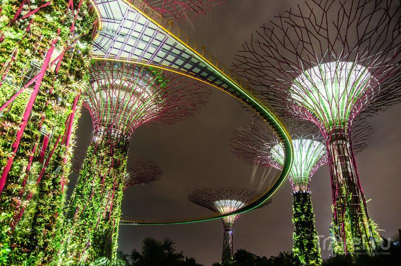 Сингапур. Gardens by the Bay / Сингапур
