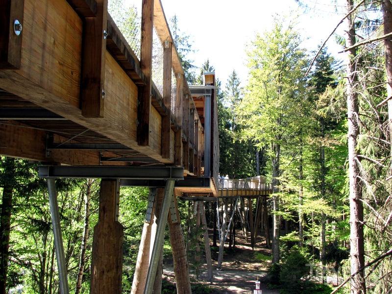 Тропу высотой от 8 до 25 метров поддерживают надежные деревянные опоры / Германия