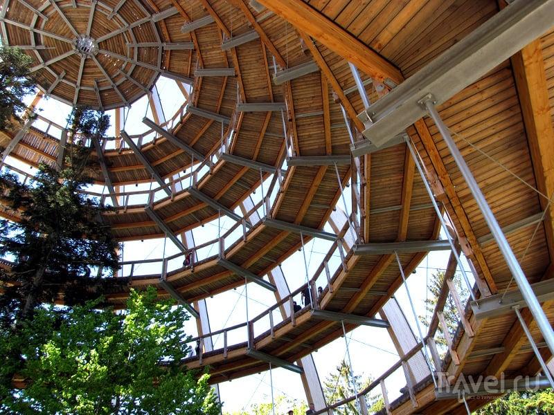 Внутри смотровой башни-яйца растут деревья / Германия