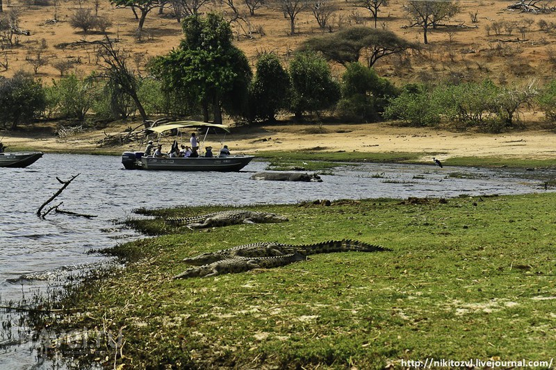 Замбия-Ботсвана. Граница / Фото из Замбии