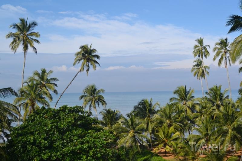 В Ваддуве, Шри-Ланка / Шри-Ланка