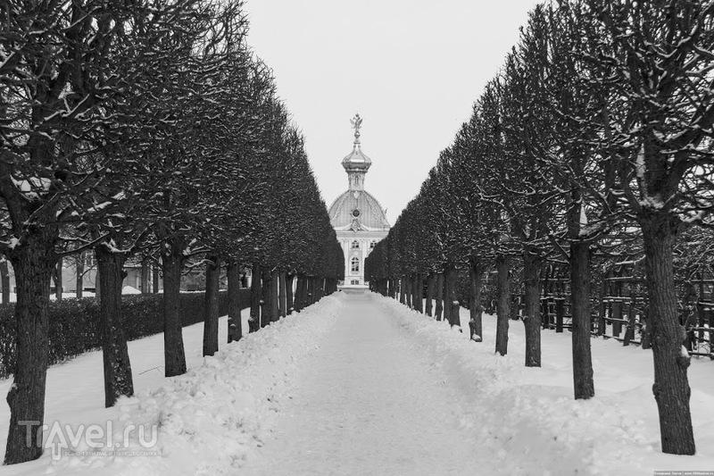 В Петергофе, Россия / Фото из России