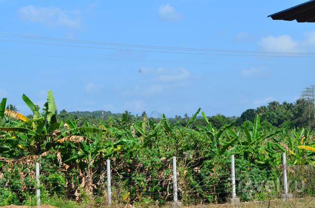 Шри-Ланка 2014 / Шри-Ланка