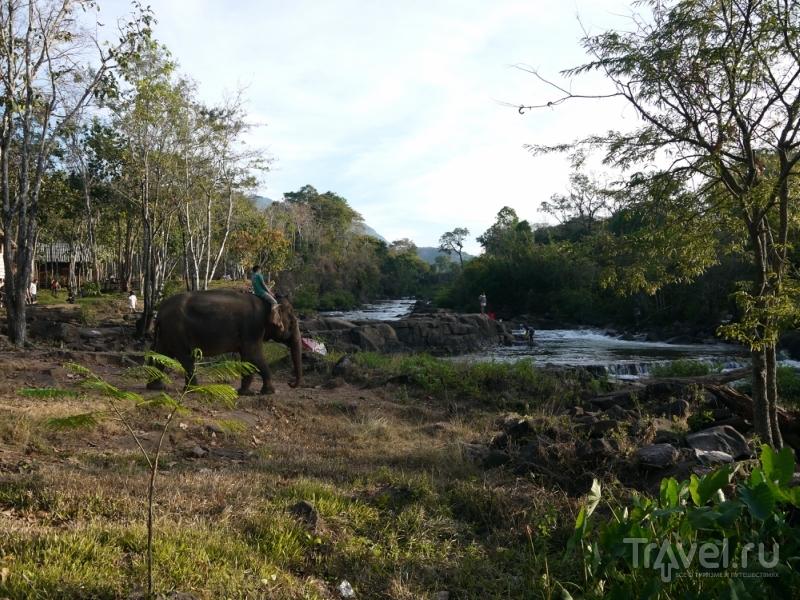 Петляя по плато Болавен / Лаос