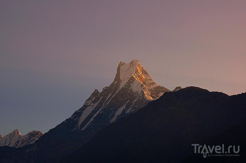 Мачапуччаре на рассвете / Фото из Непала